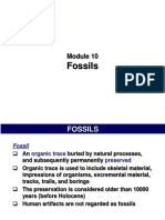 Module 10 - Fossils