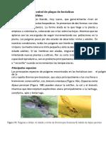 Descripción y Control de Plagas de Hortalizas