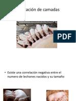 Nivelación de camadas.pptx