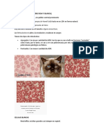 Morfología Celular Felinos