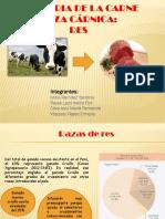 yandina carnes.pptx