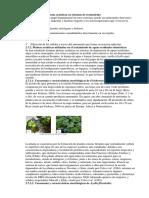 Actuación de Las Plantas Acuáticas en Sistemas de Tratamiento
