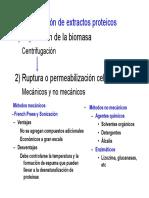Extractos Proteicos- Electroforesis