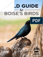 Field Guide to Boises Birds 101415
