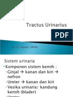 Tractus Urinarius