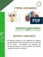 Sistema Urinario Okissssssss