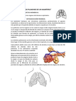 Diseccion de Los Pulmones de Un Mamifero. p27ract. de 1º Nº 2