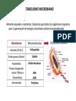 Metabolismo 2018 PDF