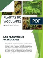 Plantas No Vasculares GERMAN