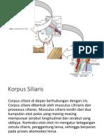 siliaris.pptx
