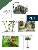 plantas extintas