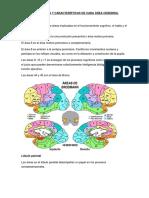 Localización y Características de Cada Área Cerebral