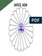 GRAFICO ADN.pptx