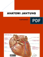 ANATOMI JANTUNG