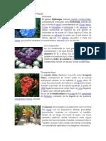 PLANTAS MEDICINALES Ornamentales y Medicinales