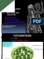 10 Metabolismo Celular Glucolisis