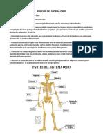 Función Del Sistema Oseo
