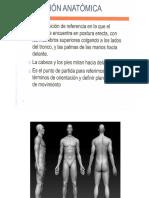 Anatomia Esdqueleto Ppt (Paula)