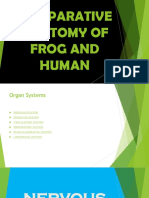 COMPARATIVE-ANATOMY-OF-FROG-AND-HUMANnn (1).pptx