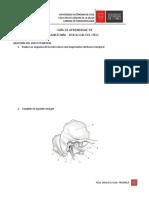 Guia de Aprendizaje de Anatomía y Fisiología