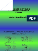 Anatomi Dan Histologi Repro