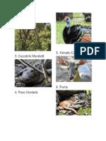 Animales en Péligro de Extincion en Guatemala