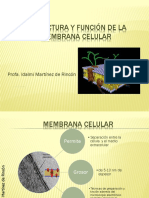 331823928-Bio-110-3-Estructura-y-Funcion-de-La-Membrana-Celular-3.ppt