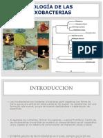Ecología de Las Mixobacterias