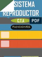EL SISTEMA REPRODUCTOR.pptx