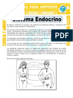 Sistema Endocrino Para Sexto de Primaria