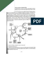 Cap.6.1.-Utilizarea_scheletului_de_carbon_al_aminoacizilor.pdf