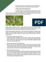 Manfaat Rumput Fatimah Pada Bumil