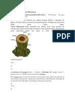 botanica.docx
