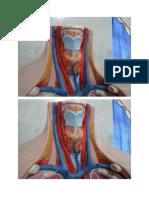 anatomi endokrin gmbr