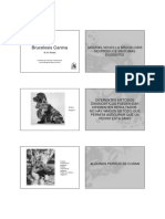 Brucelosis.pdf