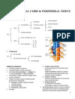 Anatomi Blok 1.5 Spinal Cord & Peripheral Nerve
