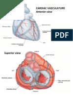 VA Heart Vasculature
