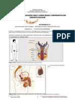 Actividade 9 -Desenvolvimento Sexual Biológico – Morfologia do Sistema Reprodutor Masculino