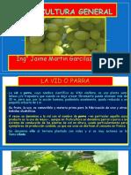 VITICULTURA GENERAL 2 Sistematica%2cPatrones y Portainjertos -Morfologia de Vid 2