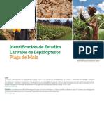 Identificacion de Estadios Larvales de Lepidopteros Plaga Maiz