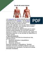 ANATOMIA 2018 Musculo Del Cuerpo Humano.