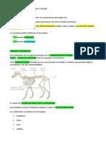 APUNTES BIOLOGIA REINO ANIMAL Y VEGETAL.doc