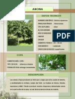 Árboles Frutales de La Selva