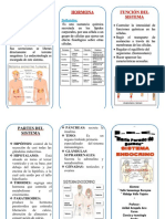 Docdownloader.com Triptico Sistema Endocrino