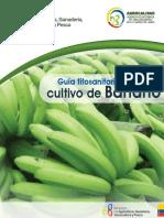 Guia de Campo Banano1