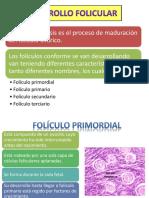 DESARROLLO FOLICULAR ppt.pptx