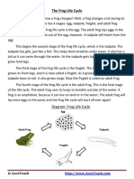 The Frog Life Cycle Reading Comprehension