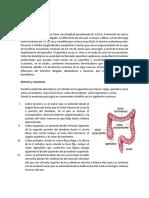 Anatomía del colon.docx