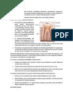 IDENTIICACIÓN DENTAL.docx