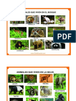 Animales Selva y Bosque